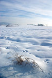 Severe winter Royalty Free Stock Images