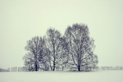 Severe winter landscape in a dull day Stock Photos