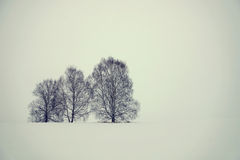 Severe winter landscape in sunless day Stock Photography
