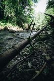 A wide mountain stream. Severed branch next to a stream in Tatra mountains Royalty Free Stock Images