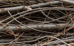 Severed branches of different sizes stock photography
