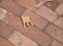 Severed hand? Stock Photos