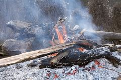 Bonfire. Severely burning fire in the woods of the old branches and logs Stock Images