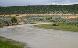 Sevier River scene in Utah Royalty Free Stock Image