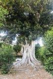 Sevilla Andalucia, Hiszpania: park Obrazy Royalty Free