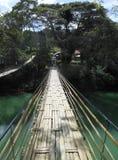 Sevilla bambusa most na Bohol Filipiny Zdjęcia Stock