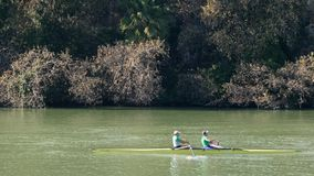 Sevilla, Spain. Rowers training on the river Guadalquivir stock video
