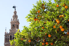 Seville. Church tower and orange tree in Seville, Spain Stock Photo