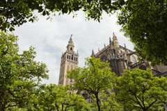 Seville Cathedral and the Giralda views from the garden of the O Stock Photo