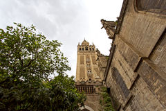 Seville Cathedral and the Giralda views from the garden of the O Royalty Free Stock Photo