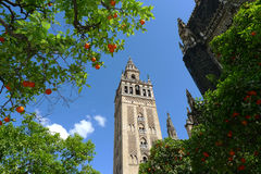 Seville Cathedral and oranges, Spain Royalty Free Stock Photography
