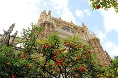 Seville cathedral and orange tree, a Symbol of Seville and Spain.  Royalty Free Stock Image