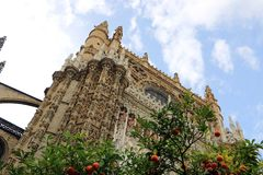 Seville cathedral and orange tree, a Symbol of Seville and Spain.  Stock Photography