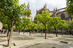 Seville domkyrka och de Giralda sikterna från trädgården av nollan fotografering för bildbyråer