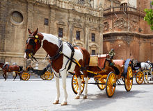 Seville Horse Carriages In Cathedral Of Sevilla Royalty Free Stock Image