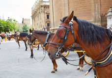 Seville Horse Carriages In Cathedral Of Sevilla Royalty Free Stock Photography