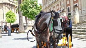 Seville konia fracht zdjęcie wideo