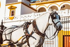 Seville Maestranza bullring placu Istni toros de Sevilla w Andalusia Hiszpania fotografia royalty free