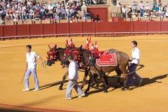Seville, Maj - 16: Dostawać przygotowywający dla podniecenia przy bullfight zdjęcia royalty free