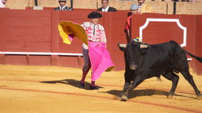 Seville - May 16: Spanish torero is performing a bullfight at th Stock Photography