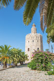 Seville - The medieval tower Torre del Oro Stock Image
