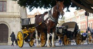 Seville plaza hourse tourist ride 4k spain. Spain seville plaza horse tourist ride 4k stock video