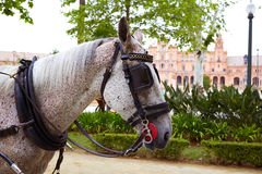 Seville Sevilla Plaza de Espana horse Andalusia. Spain Royalty Free Stock Photo