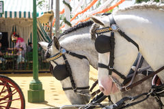 Seville, Spain - April 23, 2015: Horse drawn carriage on the Fai Royalty Free Stock Photos