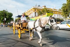 Typical Andalusian horses with carriages Stock Image