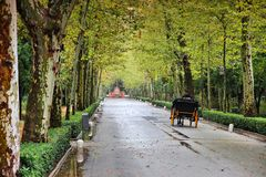 Seville, Spain. Famous Maria Luisa park. Plane tree lined alley Royalty Free Stock Image