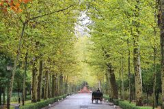 Seville. Spain - famous Maria Luisa park. Plane tree lined alley Stock Photography
