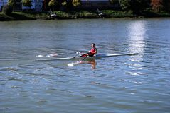 Rower on the Guadalquivir river, Seville, Spain. Rower along the Guadalquivir river, Seville, Seville Province, Andalusia, Spain, Europe stock photography