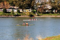 Rowers on the Guadalquivir river, Seville, Spain. Rowers along the Guadalquivir river, Seville, Seville Province, Andalusia, Spain, Europe stock image