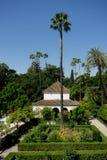 Seville Spanien - Juni 19: Palmträdet i Alcazarträdgården, S Arkivfoton