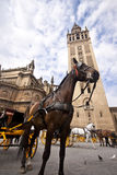 Seville - Tourist horse carriage. In front of the Cathedral Royalty Free Stock Photos