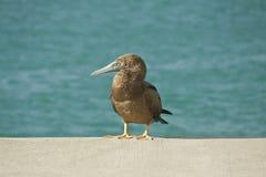 Sevogel Lizenzfreies Stockbild