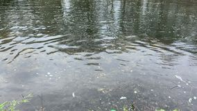 Sewage discharges into the river