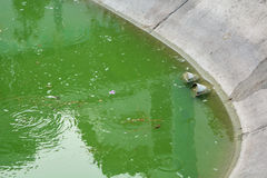 Sewage. And green waste in the water Stock Photos