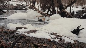 Sewage pollutes the forest. Waste in dirty waste water with foam in the forest. Ecological disaster.