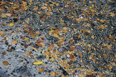 Sewage water pollution waste Stock Images