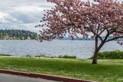 从Seward公园看见的华盛顿湖 免版税库存图片