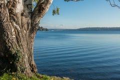 Seward park - Dżdżyści 3 obrazy stock