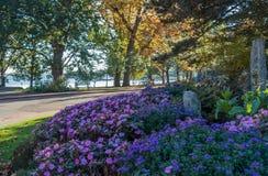 Seward park - drzewa 3 obraz royalty free