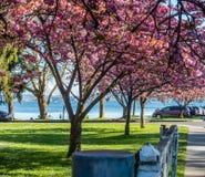 Seward park Kwitnie 5 obraz stock