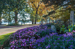 Seward Park -Trees 3. Trees at Seward Park in Seattle, Washington turn as Autum sets in Royalty Free Stock Image