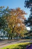 Seward Park -Trees. Trees at Seward Park in Seattle, Washington turn as Autum sets in Stock Photos