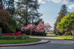 Seward Park Turnaround. A view of Spring flowers near the entrance to Seward Park in Seattle, Washington Royalty Free Stock Photography