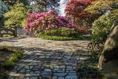 Seward Park Walkway. Flowers grow along a walkway at Seward Park in Seattle, Washington Royalty Free Stock Images