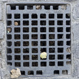 Sewer grate Royalty Free Stock Photo