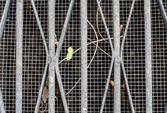 Sewer/ventilation grid with leaves and sticks Royalty Free Stock Photo
